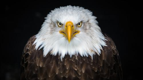 A LEGAL EAGLE'S THREE TIPS TO GDPR