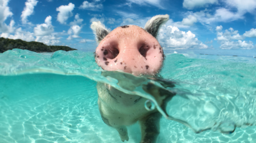 This Week In Social: The Return of the Moonpiglets